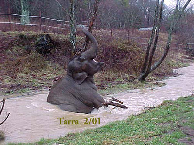 Tarra and the swollen creek, February 2001
