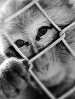 Las Vegas Zoo Primate